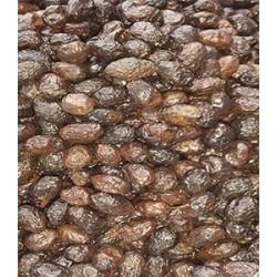 Dry Aragon olive